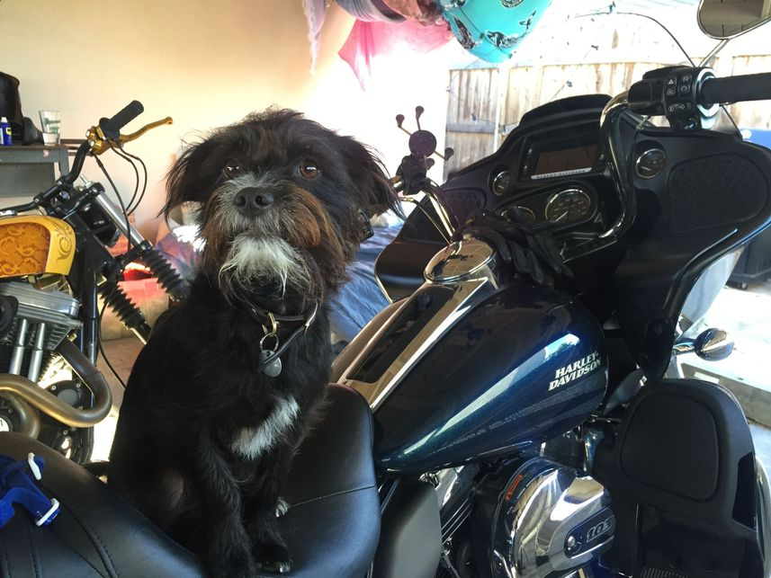 Riding On A Motorcycle With Your Dog